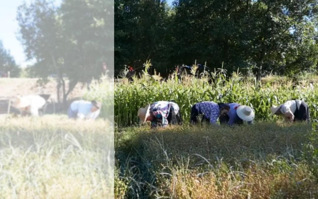 Como aumentar a visibilidade e a participação — cívica e associativa — das mulheres agricultoras?